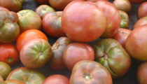 Michele the Trainer's TOMATO SEASON featuring Gazpacho!!