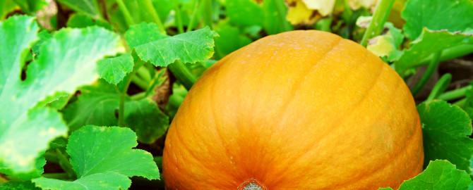 Michele the Trainer's Freezy Vanilla Pumpkin Pie Smoothie